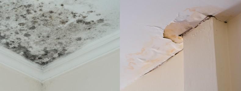 Aplica pintura impermeabilizante para atacar la humedad